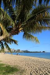 Palm Tree & Diamond Head, Ala Moana Beach Park (ALOHA de HAWAII) Tags: alamoanabeachpark