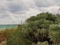 Natural Beauty: South Beach, Miami (John.Johnson.15) Tags: miami beach florida south sun fun vacation stormy skies party people walking sand clouds sunlight glow chairs tourist yellow tan white foliage grass tall