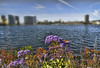 Oakland Wild Flowers (msuner48) Tags: d750 acr5 cs4 water lakemerritt oaklandca wildflowers sky skyline buildings shoreline horizon nikcollection nikonafs24120mmf4ged