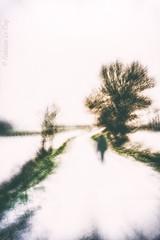 Oublier les promesses (Fabrice Le Coq) Tags: vert arbre ciel route pelouse couleur paysage photographie silouhète piéton