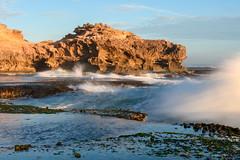 One brave Seagull / one foolish photographer / one wild ocean (Derek Midgley) Tags: dsc3170 seagull waves crashing ocean wild rocky platform shelf insane crazy