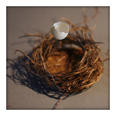 floating eggshell (piktorio) Tags: berlin germany eggshell floating flying nest studio tabletop twigs life symbolism piktorio surrealism form shape emptiness natural fullfledged growth iriscolours spectrum