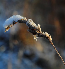 Stuck Fast (Paul Bagshaw ---- UK) Tags: snow frost nature winter uk sheffield eos canon 60d