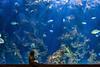 Underwater Dreams (_Hadock_) Tags: underwater subacuática azul blue sub acuática water acuario aquarium donosti san sebastian donostia sansebastian guipuzcoa euskadi creative commons cominos fullhd fondo de pantalla screensaver nikon d750 tamron 2470 wallpaper walpaper niña girl kid blonda dream dreaming