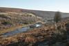 Parc Cwm Darran (Parishes of the Buzzard) Tags: ferns bracken deri parccwmdarran ogilvie wales welsh hillside woodland woods southwales valleys valley lake pond island