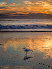 A gull and the ocean, 2 (Ed Rosack) Tags: usa landscape nature water surf ©edrosack panorama florida beach ocean cloud bird sky seascape centralflorida sunrise cocoa 35gullsternsandskimmers cloudy dawn shore cocoabeach