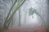 Archway (SASHA TURPIN) Tags: arch trees forest forêt france path footpath fog mist foggy misty moody faeryland canon 5d 24105mm landscape