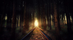 into the light (Chrisnaton) Tags: surreal forest wood light trees intothelight finaldestination rails