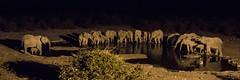 Did you miss me? (zimbart) Tags: halali namibia etosha africa fauna vertebrata mammals loxodonta loxodontaafricana elephantidae elephant
