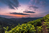 The biggest cliche in photography for its own reasons (Navaneeth Kishor) Tags: sunset dusk evening sky clouds cloud vibrant tea ooty udagamandalam udagai tamilnadu hill mountain hillstation valley kettivalley ketti conoor conoorroad landscape india indian