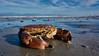 Sonnenbad (Froschkönig Photos) Tags: sonnenbad nordsee strand beach krabbe krebs himmel sky crab sunbathing