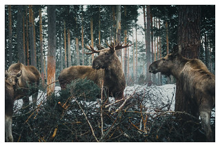 Antlers in the woods