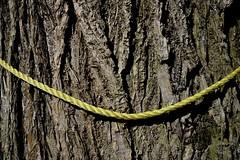 twisted smile (Paul B. (Halifax)) Tags: nikon d7000 sigma1020mm456exdc halifax novascotia canada morrisst urbanabstract tree rope smile