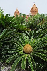 green plants :) (green_lover) Tags: plants vegetation greenery siampark tenerife canaryislands spain green travels 7dwf