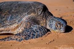 1 29 Poipu Beach 2018-01-29 017-LR (jamesabbott1963) Tags: canon70d kauaipoipu koloa hawaii unitedstates us