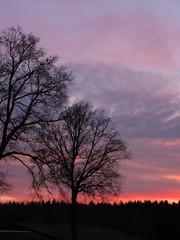 ...trees in the sunset..... (elisabeth.mcghee) Tags: abendrot sonnenuntergang sunset abendhimmel wolken clouds bäume trees unterbibrach oberpfalz landschaft himmel