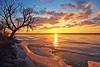 056/365 (local paparazzi (isthmusportrait.com)) Tags: 365project canon5dmarkii canon24105mmf4lisusm ef eos lopaps pod 2018 iso160 24105mmf4lisusm is usm f4l 24105mm redskyrocketman localpaparazzi isthmusportrait madisonwi danecountywisconsin bbclarkbeach sunrise morning sun soul liquid lake frozen lakemonona puddles puddle reflection reflecting reflect beautiful pretty f8 24mm wide zoomlens kitlens morninglight lights glowing orb sunshine sunny isthmus landscape landscapephotography ice shoreline icyshore winter winterlandscape