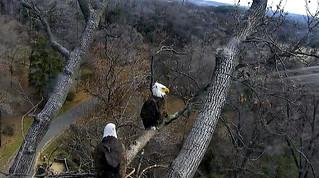 DC Eagle Nest, 3.3.2018