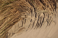 Sand patterns created by tidal run-off (nikname) Tags: beach oregon oregonbeaches beaches shadows naturalabstract sandformations naturalsandformations patterns sandpatterns sanddesigns naturaldesign oceansideorbeach oceansideoregon