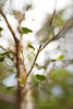 (Daniela Romanesi) Tags: 0218 tree galhos leaf leaves folhas verde natureza natural garden lensbaby composerpro sweet35