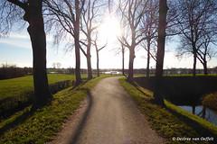Follow the sun (Desiree van Oeffelt) Tags: netherlands nederland landscape landschaft landscapes nature outdoors desireevanoeffelt canon clouds cloud hiking hike sun sunlight sunshine sunrays tree trees light