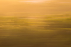 Afternoon Gradients (haddartist) Tags: artsy artistic contemporary afternoon light sunset glow golden colorful gradient forest trees blur pan panning slowshutter longexposure motion view above natal riograndedonorte brazil brasil