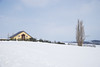 冬。北海道. (bgfotologue) Tags: photo landscape winter 樹 風光 outdoor 戶外 雪地 biei 雪 2017 攝影 亞洲 bgphoto 風景 wide 北海道 藍天 asia 冬季 冬 image 美瑛 snow sony 木 廣闊 bellphoto imaging blue hokkaido tree tumblr 500px sky 日本 白 photography japan white