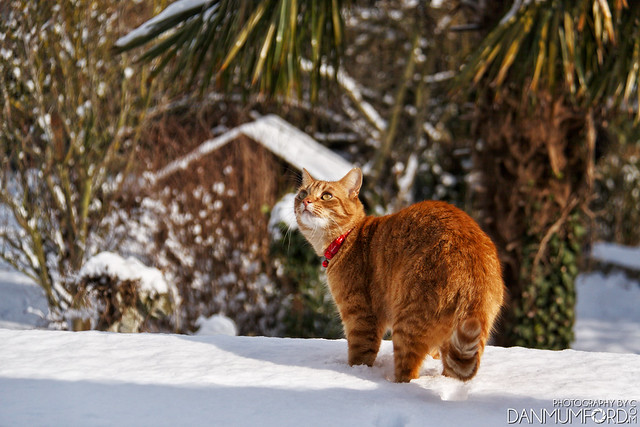 Harry in the snow - 'Beast from the East'