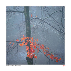 Leaf Marcescence (Chalky666) Tags: tree trees wood woodland leaves snow southdowns westsussex fog painterly landscape