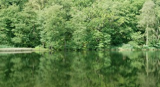 The Forest of Dean - Reflecting on a Beautiful Area of England