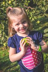 Apple Picking @ Hillcrest Orchards (crashmattb) Tags: hillcrestorchards applepicking september 2017 georgia ellijay northgeorgia canon70d tourism isabelrose