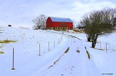 Red Barn in Winter (Lois McNaught) Tags: redbarn oldbarn barn rustic rural farm winter snow dundas hamilton ontario canada scene landscape nature oldbuildng