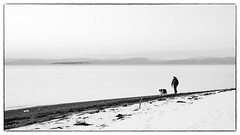 Walking / The Dog (Eline Lyng) Tags: coastline seascape nature landscape people dog pet animal walking norway jeløy jeløya østfold winter snow monochrome monochrom leica leicas s 007 blackandwhite mediumformat 70mm leicalens