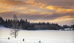 Winter Sunset, Norway (AdelheidS Photography) Tags: adelheidsphotography adelheidsmitt adelheidspictures norway norge noorwegen norwegen noruega norvegia nordic norvege norden winterbeauty winter sunset snow scenery scandinavia nordreland clouds dusk tree sky forest pines