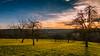 Sonnenschein (Sascha Wolf) Tags: sonne sonnenschein baum wiese abendsonne
