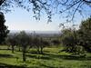 Orchard on Via Beato Padre Ludovico da Casoria, Assisi, Italy (Paul McClure DC) Tags: assisi italy italia umbria oct2016 historic scenery