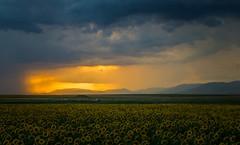 Just before the summer storm (Pavel Valchev) Tags: a6000 nex ilce 28mm fe lens landscape storm bulgaria lightroom af prime sony