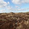 Nationalpark Thy (5) (mrstendal) Tags: nationalpark thy