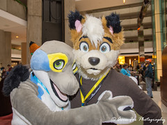 _DSC2051 (Acrufox) Tags: midwest furfest 2017 furry convention december hyatt regency ohare rosemont chicago illinois acrufox fursuit fursuiting mff2017