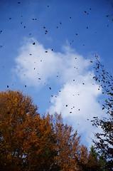 Autumn memories (Baubec Izzet) Tags: baubecizzet nature autumn leaves