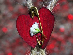 Two Hearts and Twine (mdsaltsman) Tags: fasteners macromondays