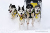 Sled dog race (My Planet Experience) Tags: alaskan siberian husky huskies team dog animal nordic sled snow speed race racing running musher mushing pulka pulk sledge sleigh white winter alaska yukon siberia myplanetexperience wwwmyplanetexperiencecom