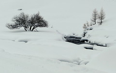 Camminando sulla neve ... (Augusta Onida) Tags: bianco white neve snow nero inverno winter leicam montagna mountain altoadige sudtirolo valleaurina landscape tree