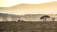 Nairobi-Nationalpark-0509 (ovg2012) Tags: kenia kenya nairobi nairobinationalpark