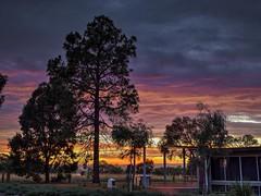 Sunrise at St Mark's - Barton - ACT - Australia - 20180112 @ 06:10 (MomentsForZen) Tags: trees sky blue red orange gold yellow sunrise dawn stmarksntc stmarksnationaltheologicalcentre stmarks wideanglelens photomatixpro lightroom cfv50c 501cm asselblad mfz momentsforzen barton australiancapitalterritory australia au