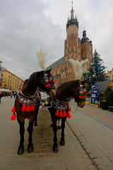 XE3F6965 - Cracovia - Crakow - Krakow (Enrique R G) Tags: basílica santamaría saintmarys church cracovia cracow krakow województwo małopolskie voivodato de pequeña polonia lesser poland voivodeship torre hejnał mariacki fujixe3 fujinon1024 caballos horses