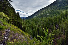 Agnes Gorge with a Nearby Mountainside Stretching off to the Horizon (North Cascades National Park Service Complex) (thor_mark ) Tags: agnesgorgetrail azimuth82 bluesskieswithclouds bonanzamassif capturenx2edited cascaderange centralnorthcascades colorefexpro day5 evergreentrees evergreens glacierpeakwilderness gorge grassyfield grassymeadow hiketoagnesgorge hillsideoftrees landscape lookingeast methowmountains mountainvalley mountains mountainsindistance mountainsoffindistance mountainside nature nikond800e northcascades northcascadesnationalparkcomplex northcascadesnationalparkservicecomplex northmethowmountains okanoganwenatcheenationalforest outside pacificranges partlycloudy portfolio project365 rainbowmountain rollinghillsides sisiridge sunny talltrees trees triptonorthcascadesandwashington wenatcheenationalforest washington unitedstates
