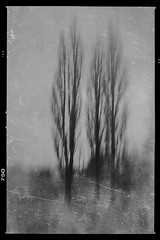 Three is a Magic Number (Bill Eiffert) Tags: trees magic number texture blackandwhite concept mood atmosphere