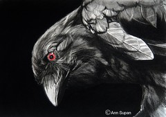 POSSESSED 8 (Sketchbook0918) Tags: crow charcoal color pencil drawing eye red avian wildlife feathers possessed dark selective coloring bird portrait art