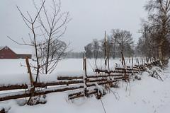 Snow on fence (Cajofavi) Tags: fs180225 staketinenglishfence staket gärdsgård fence fotosondag lindsdal kalmar sweden snö snow field tree forest sky landscape 雪